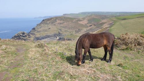 Boscastle Ponies