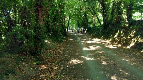 Camel Valley Cycle Route